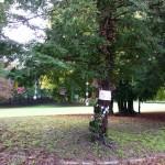Arbre de paix Eurville-Bienville